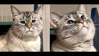 Download 愛情に飢え、淋しさに耐え忍んでいた保護猫。ある日、施設を訪れた家族に一番乗りで駆け寄り、猛アピール!その後・・・【nekoの部屋】 Video