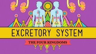 Download The Excretory System: From Your Heart to the Toilet - CrashCourse Biology #29 Video