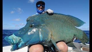 Download Emeraude Fishing - Popping & Jigging - X-trem - Season 2017 Video