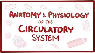 Download Anatomy & physiology of the circulatory system (heart) Video