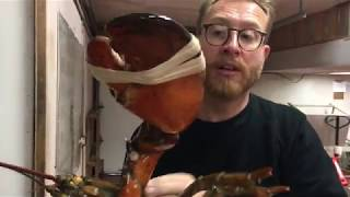 Download 50 Yr Old LOBSTER The BIGGEST LOBSTER YOU'VE EVER SEEN | Nova Scotia Canada Video