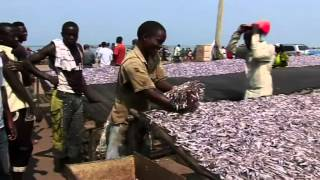 Download A FAO successful project in Burundi: ''Support to post-harvest fisheries technology'' Video