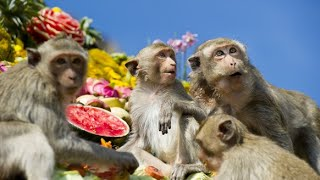 Download Thailand Monkey Feast in Lopburi Video