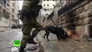 Download Russian sappers sweep Aleppo for mines, discovering shells made in US, Germany Video