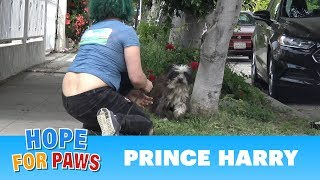 Download An unexpected rescue of Prince Harry! Video