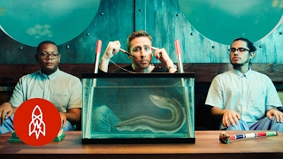 Download An Eel To Never Feel | The Aquatic World With Philippe Cousteau, S2 EP 7 Video