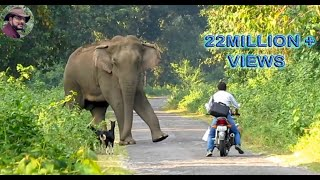 Download Elephant Suddenly Appeared In Front of a Biker. Video