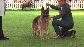 Download Windsor Championship Dog Show 2011 Best in Show Video