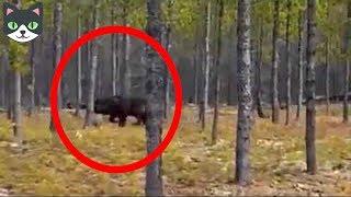 Download 5 HOMBRES LOBOS CAPTADOS EN VIDEO - Hombres Lobos Vistos En La Vida Real Video
