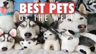 Download Best Pets of the Week | June 2018 Week 1 Video