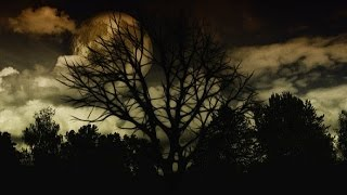 Download HAUNTED FOREST ◣ ◢ Scary Sounds of Ghosts in the Darkness 🎧 2 HOURS Video