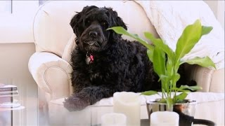 Download SickKids - Meet Moxie the pet therapy dog Video