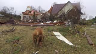 Download Assessing tornado damage in Northeast Alabama Video