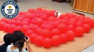Download Fastest time to pop 100 balloons by a dog - Guinness World Records Video