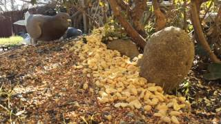 Download Monday January 16th, 2017 Squirrel Cam and Bird Feeder Cam Video