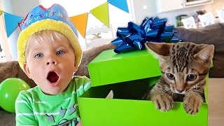 Download BIRTHDAY KITTEN SURPRISE! - Ollie's 3rd Birthday Special Video