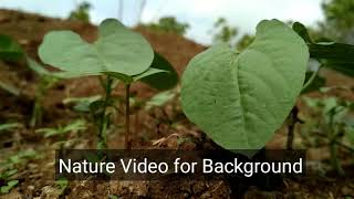Download HD Nature video for Background Video