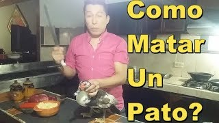 Download Como Matar Un Pato ? por JAROM MUSIC Video