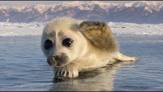 Download Cutest Wild Baby Animals Ever Video