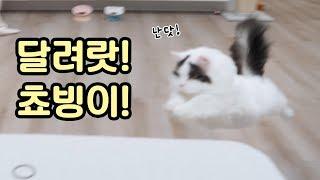 Download 똥꼬발랄 고양이의 우다다다! 달려랏 쵸빙이! Video