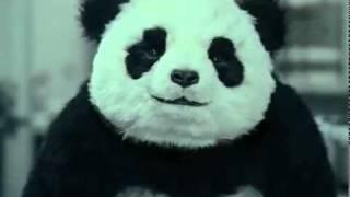 Download Never say no to Panda! Video