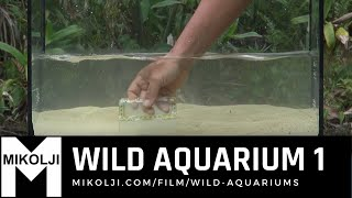Download WILD AQUARIUM 1 Video