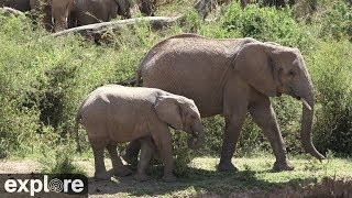 Download African Animal Lookout Camera powered by Explore.org Video