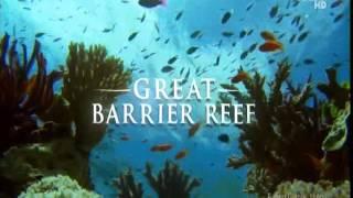Download Great Barrier Reef Video