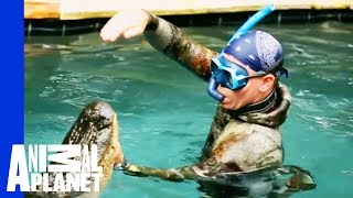 Download An Unwelcome, 10 Foot Long Pool Guest | Gator Boys Video