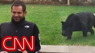 Download Panther sneaks up behind man and then ... Video