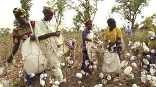 Download Coton sénégalais de haute qualité certifié par SODEFITEX - ITC Video