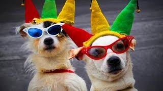 Download Funny Dogs 🐶🐾Funny Amazing Dogs (Part 2) [Funny Pets] Video