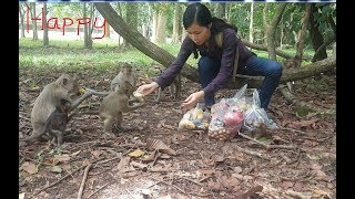 Download Lover monkey feed some food for monkey, They are so happy! Video