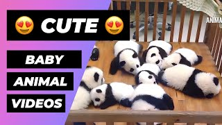 Download Baby Animals 🔴 Funny and Cute Baby Animals Videos Compilation (2018) Animales Bebes Videos Video