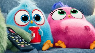 Download THE ANGRY BIRDS MOVIE 2 - 11 Minutes Clips + Trailers (2019) Video