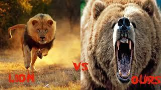 Download 10 Combats d'Animaux sauvages les Plus Impressionnants en Vidéo! Les Combats à Mort entre Animaux Video