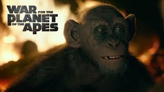 Download War for the Planet of the Apes | Meeting Bad Ape | 20th Century FOX Video