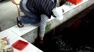 Download 看過人家怎麼釣大閘蟹嗎?來宜蘭新水釣蝦場,釣魚 釣蝦 釣大閘蟹 吃熱炒 Video
