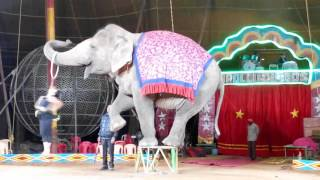 Download Apollo Circus Elephant with Girl Romance Dance of India Video