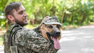 Download Dogs Welcoming Soldiers Home Compilation (2016) Video