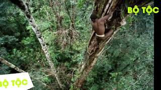 Download Bộ Tộc - Bộ tộc sống trên cây duy nhất ở Trái Đất Video