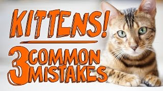 Download 3 Major Mistakes with New Kittens Video