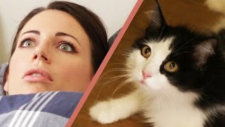 Download 10 Signs Your Cat Owns You Video