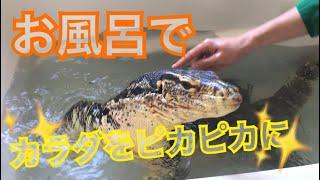 Download テン君のカラダをお風呂で綺麗におそうじ!!? Video
