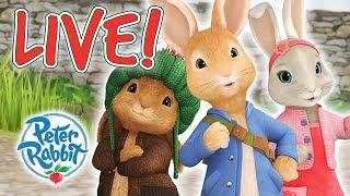 Download Peter Rabbit | Rabbit Loves Radishes - Livestream Video