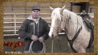 Download Rodeo Training - How to Start Calf Roping Video