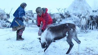 Download BBC Living with Nomads 2/3 Siberia Video
