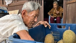 Download Durians From Another Throne In Balik Pulau Video