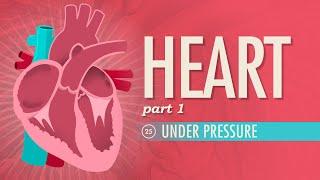 Download The Heart, part 1 - Under Pressure: Crash Course A&P #25 Video