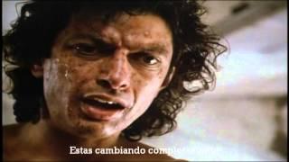 Download La Mosca ″ The Fly ″ (1986) Trailer Subtitulado Video